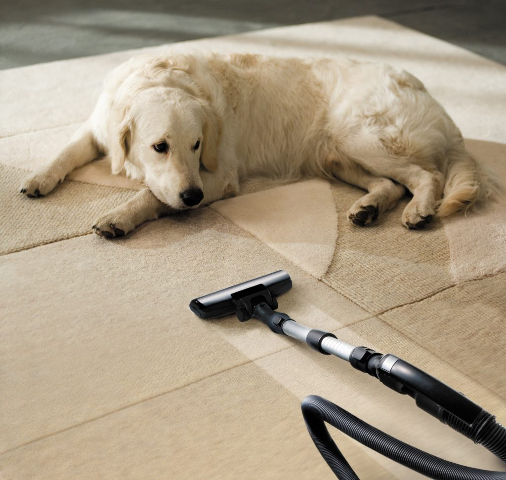carpet cleaning pets
